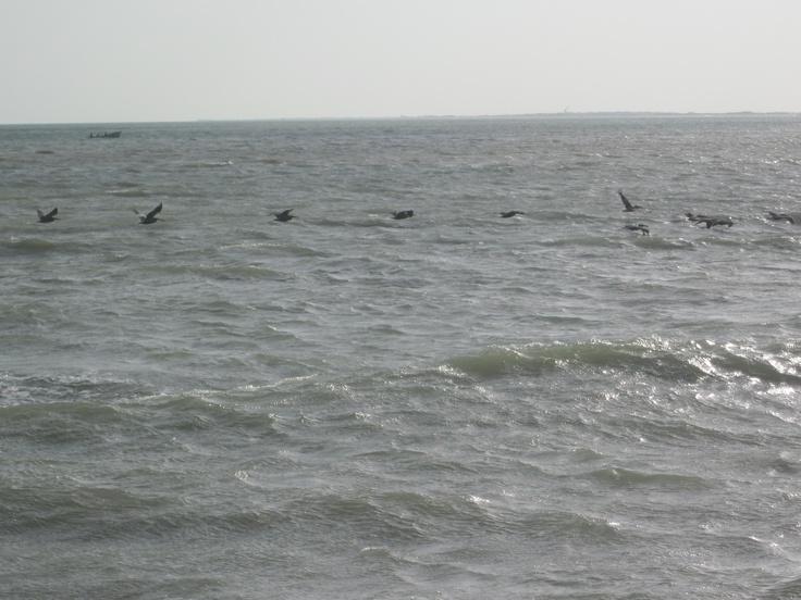 Alcatraces besando el mar. Casuso Fotos.