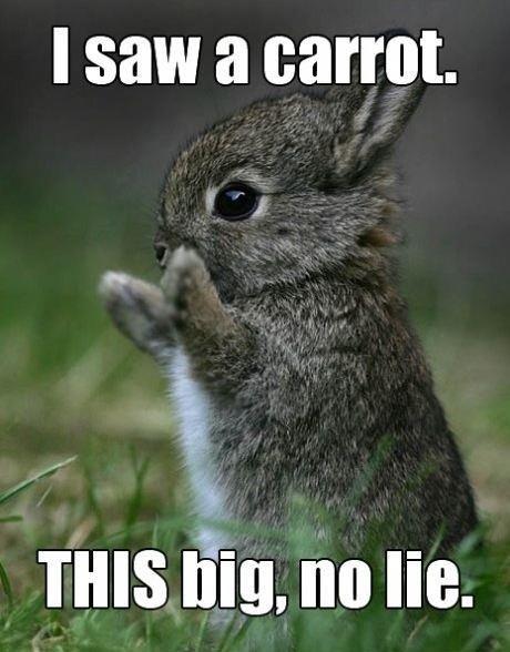 I saw a carrot this big no lie