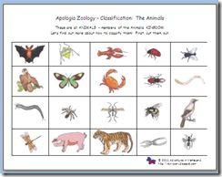 sorting classifying vertebrates invertebrates apologia science ideas pinterest student. Black Bedroom Furniture Sets. Home Design Ideas