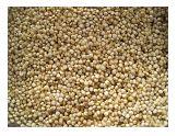 Quinoa kan in veel recepten worden toegepast, als rijstvervanger of als ontbijt. Maar het grote voordeel van Quinoa is dat het zo ontzettend gezond is!