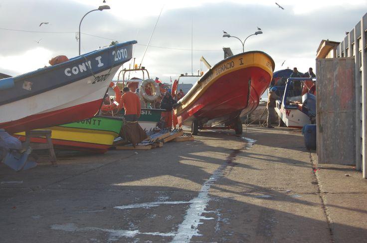 Gaviotas y Botes  puerto Maguellines Constitución