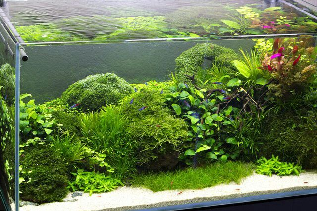Natural fish tank aquarium pinterest fish tanks for Natural fish tank
