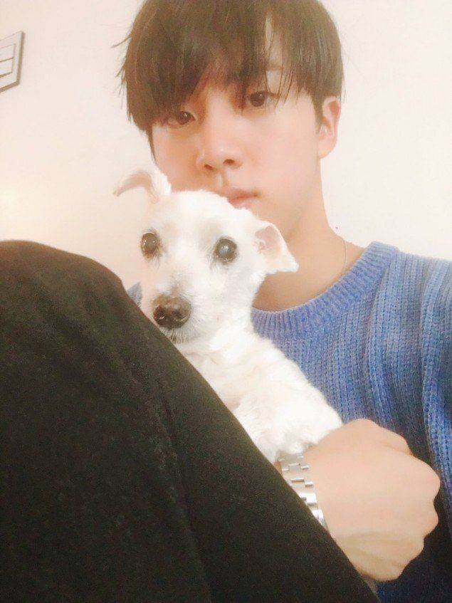 jin-shares-news-of-the-passing-of-his-canine-friend-jjanggu-with-fans-on-btss-fan-cafe