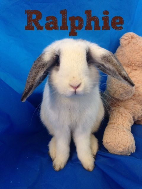 Adoptable bunnies at Rabbit Rescue Shelter