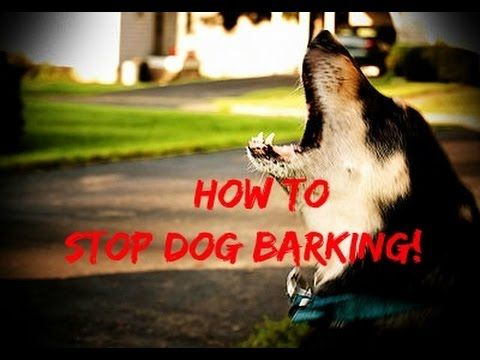 Veterinarian Gives Us Some Great Tips On How To Quickly Stop A Dog From Excessive Barking - DIY Joy