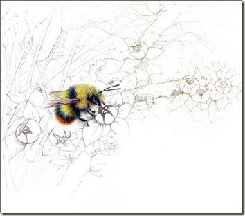 flowers bees love uk