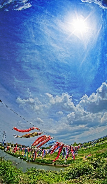 Koinobori meaning carp banner in japanese are for What does carp mean
