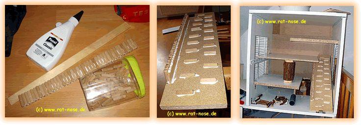Rat-Nose.De - Die Farbratten-Infoseite