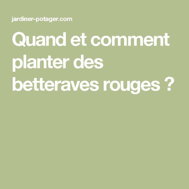 Quand et comment planter des betteraves rouges ?