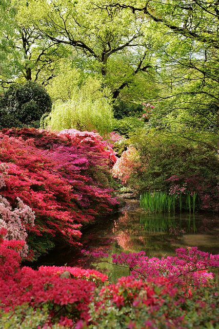 Isabella Plantation, Richmond Park, Kingston upon Thames, Greater London,  by 1771 it is shown on maps as Isabella Slade, Isabella may have been the wife or daughter of a member of staff at Richmond Park but it is more likely to be a corruption of the word Isabel, which was used as far back as the 15th century to mean dingy or greyish yellow, the colour of the soil in this part of the park. Such a stunning Royal park and not to be missed