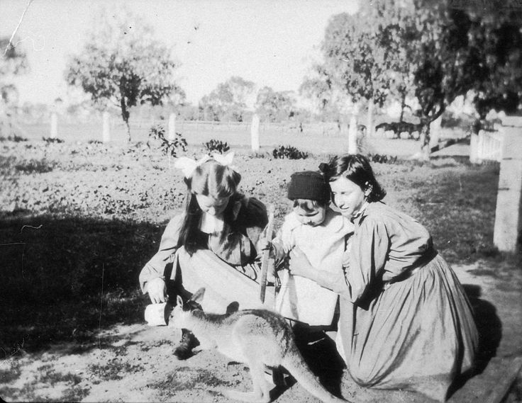 Photograph of three children feeding the Kangaroo 'JoJo' at Welltown situated in Goondiwindi in New South Wales. Photographed by D M Cameron. From the collections of the Mitchell Library, State Library of New South Wales : http://www.acmssearch.sl.nsw.gov.au/search/itemDetailPaged.cgi?itemID=390757