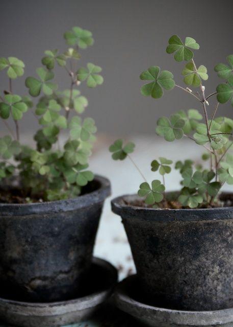 171 besten plants and flowers blogstlove bilder auf pinterest - Zimmerpflanzen groay ...