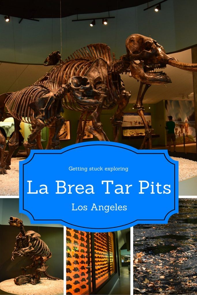 I spent a day exploring what it is like to get stuck in asphalt at the La Brea Tar Pits