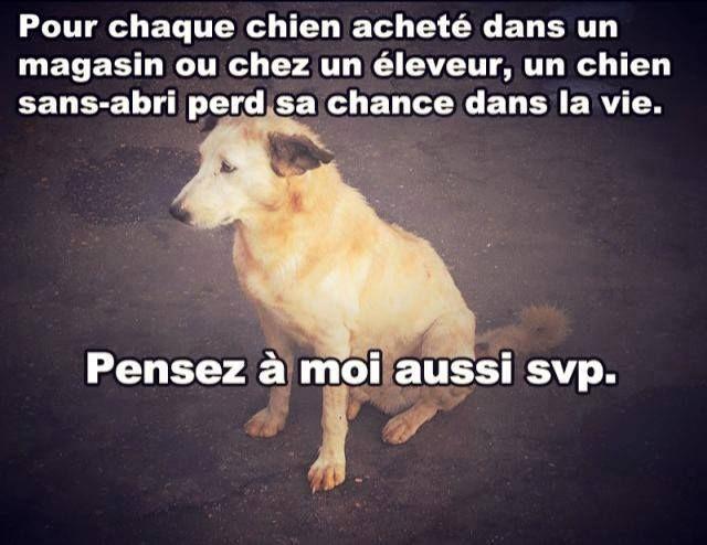 Pour chaque chien acheté dans un magasin ou chez un éleveur, un chien sans-abri perd sa dans la vie.