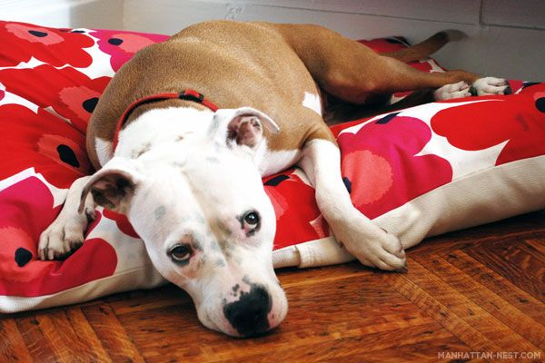 Mekkoattitude DIY doggie bed