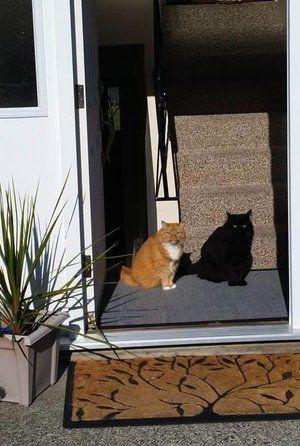 「影かと思ったら黒猫だった件」のYahoo!検索(リアルタイム) - Twitter(ツイッター)、Facebookをリアルタイム検索