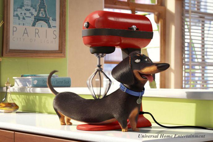 Die 11 besten Bilder zu Heike´s Pinnwand auf Pinterest Minis - bosch küchenmaschine profi 67