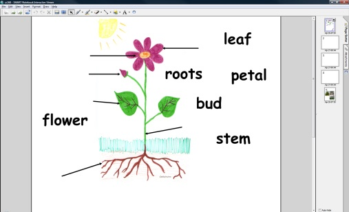 Plant labelling for IWB from Jackie Arslett