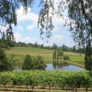 Crane Creek winery. Young Harris, GACranes Creek, Creek Wineries