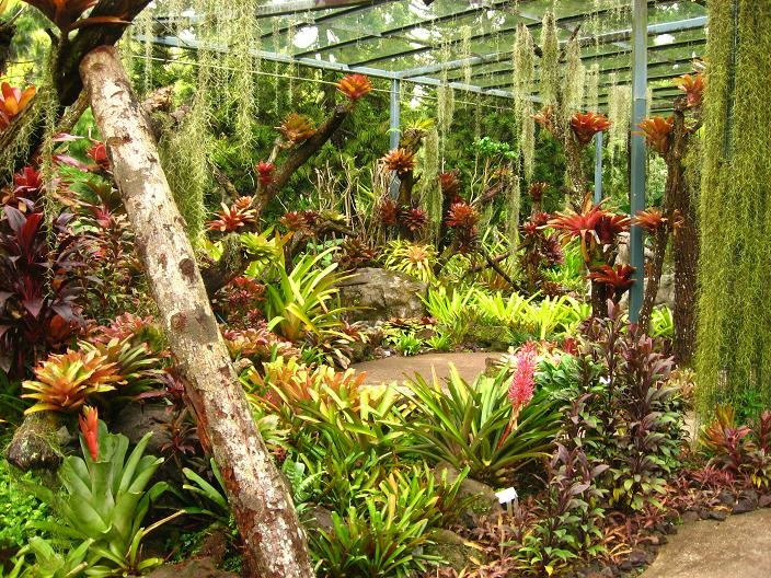 South Florida Landscaping Ideas Pictures | Gardening In South Florida:  Bromeliads In The Garden