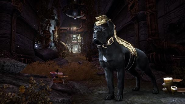 The Elder Scrolls Online: Morrowind - Release Date, Price, New Characters, Quests, New Warden Class - Everything We Know    Image Source: http://cdn.gamer-network.net/2017/usgamer/eso-morrowind-pet.jpg/EG11/resize/608x-1