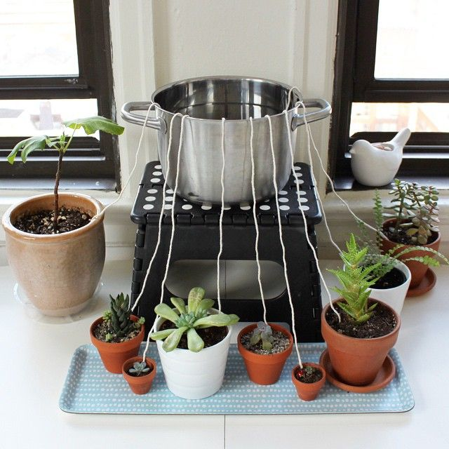Don't let your houseplants suffer while you're away from home. Rig up this DIY self-watering wicking system.