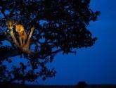 leon-subido-arbol-uganda1