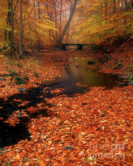 ✯ Bamboo Brook - Chester New Jersey - Absolutely Gorgeous!
