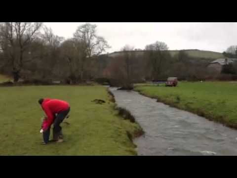 Dog jumps over a river