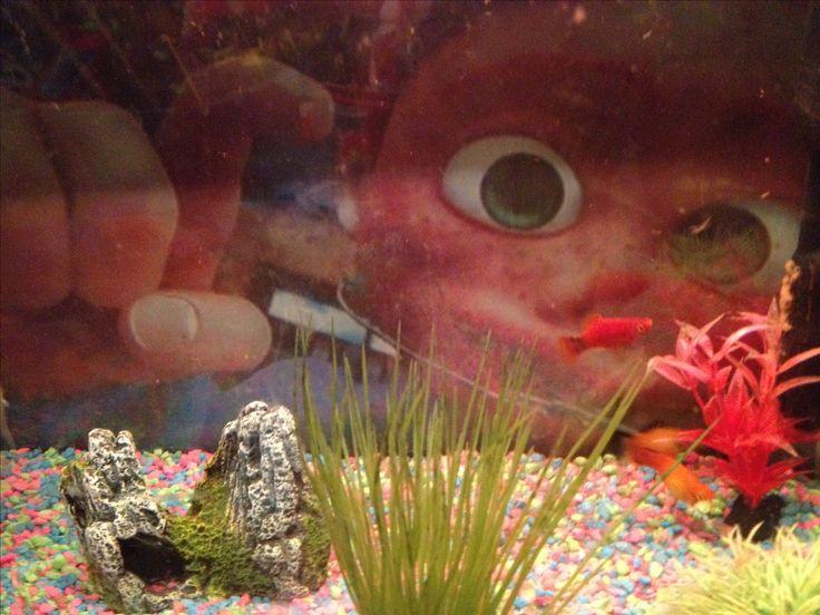 Lol finding Nemo (Darla) background of John Anthony's fish