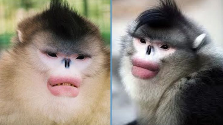 Creatures With Crazy Faces | Funny Animal Faces