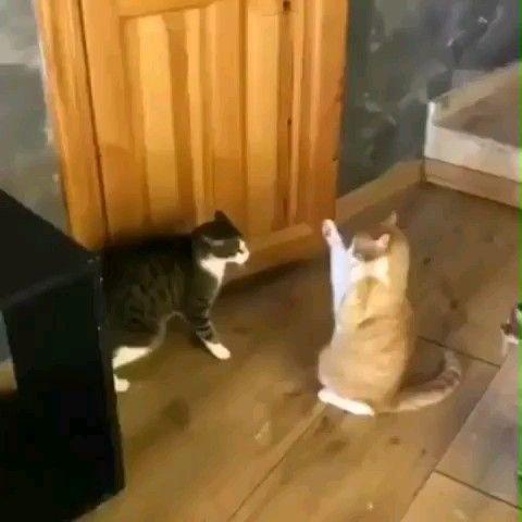 OH MEIN GOTT ! So hübsch !   – Katzen