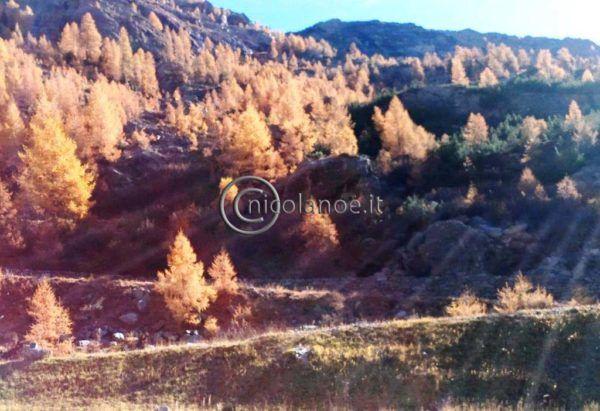 Estate indiana in Valmalenco – Nicola Noe