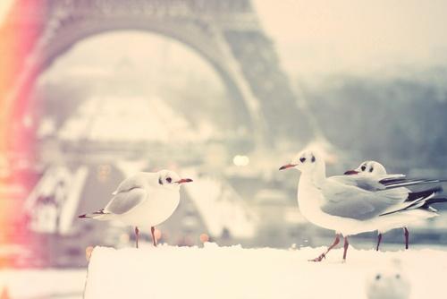winter: Animal Pictures, Every Girls, Little Birds, Paris Photography, Bears, Winter Travel, France, Cinderella, Eye