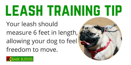 How long is your dog's leash? Your leash should measure 6 feet in length, allowing your dog to feel freedom to move.