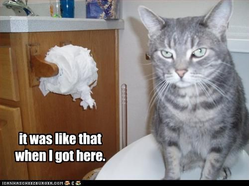 .: Friday Funnies, Funnies Pictures, Funnies Kitty, Funnies Cats, Funnies Animal Pictures, Toilets Paper, Humor, House, Bathroom