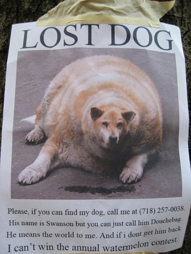 95 best Hilarious images on Pinterest Words, Drawing and Food - lost pet poster