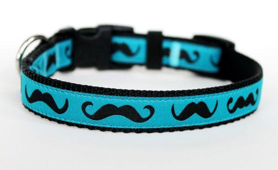 Mustache Dog Collar / Black Mustache on Teal Blue by daydogdesigns, $16.00