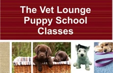 Here at The Vet Lounge we run puppy schools at the Coomera and Ormeau. They run for 4 weeks.
