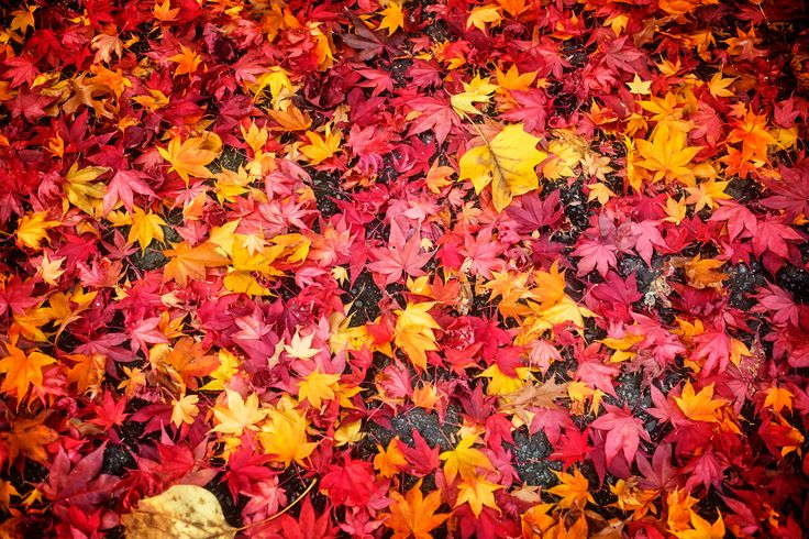 https://flic.kr/p/NcUjza | Fallen leaves | Get ready for winter .... the leaves are on the ground!