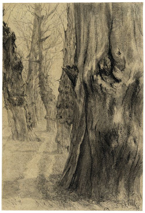 Adolph von Menzel (German, 1815-1905), Old Poplars in Winter, 1876. Pencil on beige paper, 206 × 140 mm. #tree #art
