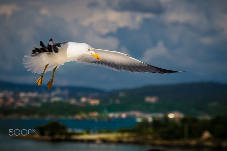 """Don't believe what your eyes are telling you. All they show is limitation. Look with your understanding. Find out what you already know and you will see the way to fly.""  ― Richard Bach, Jonathan Livingston Seagull"