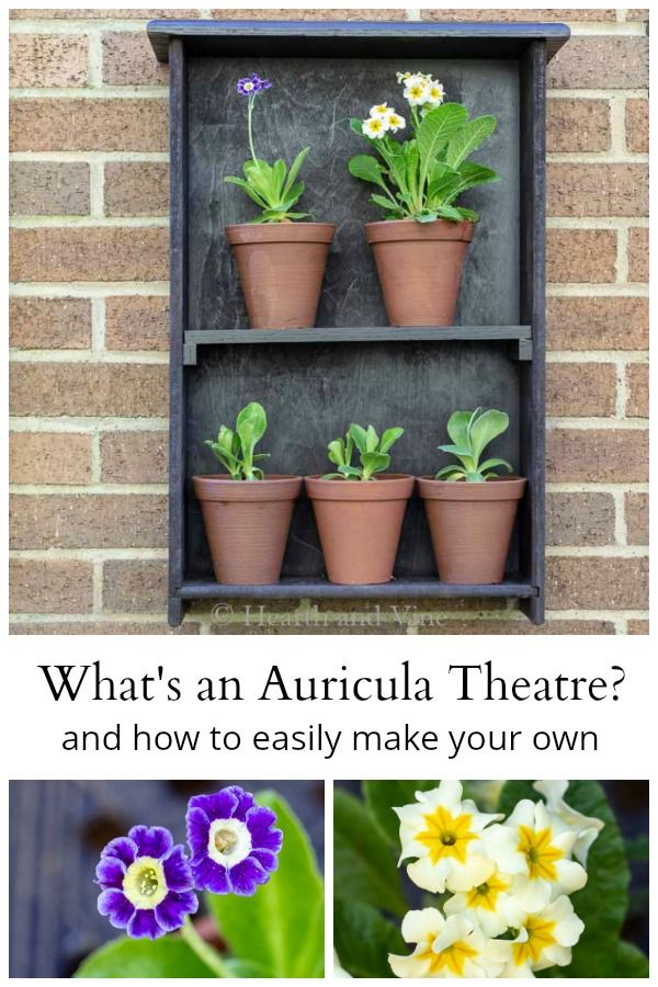 Learn How To Make An Easy Display Shelf For Your Auricula Flower Collection Gardening Flowers Primulaauricula