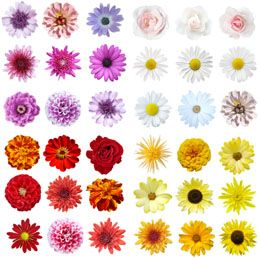 Different Types of Flowers with Pictures