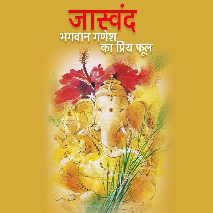 जास्वंद - भगवान गणेश का प्रिय फूल  हम सभी जानते है की भगवान गणेश को लाल फूल पसंद है और खासकर जास्वंद फूल। भगवान गणेश के साथ जास्वंद फूल चामुंडा देवी को भी चढ़ाया जाता है। इस वीडियो में देखिए इस लाल फूल का आध्यात्मिक महत्त्व क्या है? - http://bit.ly/2qVF2o7. #Artha #LordGanesha #Ganesha #GanpatiBappaMorya