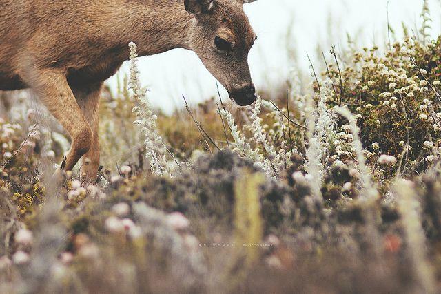Bambi Sighting? | Flickr - Photo Sharing!