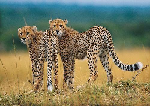 #Tanzania