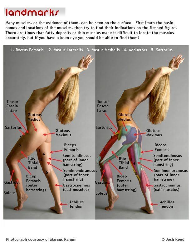 Leg Muscles - Good reference for learning more details