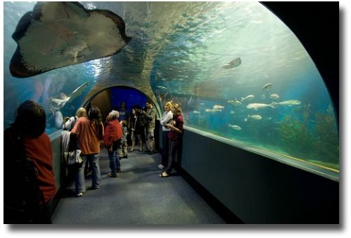 Melbourne Aquarium viewing tunnel Melbourne Australia compliments of http://www.flickr.com/photos/misterbenben/3103566467/
