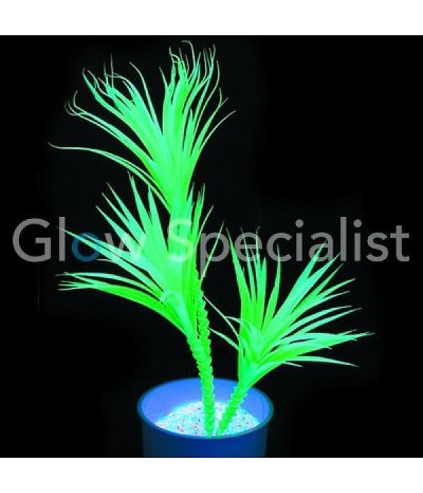 Originele lichtgevende plant..  UV yucca palm. lichtgevend bij blacklight